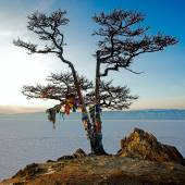 Shaman tree — Stock Photo