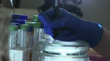 Woman working in modern laboratory — Stock Video