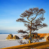 Shaman tree on Winter Baikal.  — Stockfoto