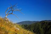 Dead tree on the mountain — Stock Photo