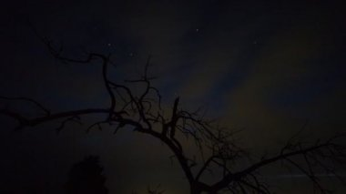 Beautiful tree silhouette — Stock Video