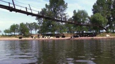 River with wood footbridge — Stock Video