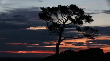 Solnedgång, rock och träd — Stockvideo