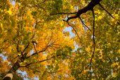 Background of beautiful autumn maple leaves — Stock Photo