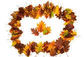 Achtergrond groep herfst oranje bladeren — Stockfoto