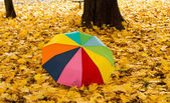 Umbrella on autumn leaves — Stock Photo