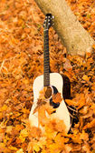 Guitar on autumn leaves — Stock Photo