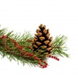 Pine branch with cones  — Stock Photo #58213677