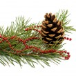 Pine branch with cones — Stock Photo #58213731
