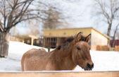 Horse at zoo — Stock Photo