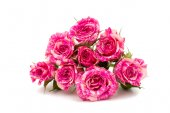 Little pink roses — Stock Photo