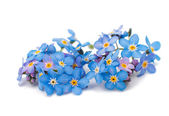 Forget-me-flowers — Stock Photo
