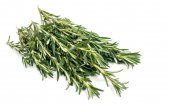 Fresh green rosemary — Stock Photo
