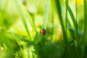 Ladybug on grass in a meadow — Stockfoto
