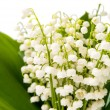 Lilies of the valley — Stock Photo #69703791