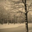 Winter landscape — Stock Photo #62083095