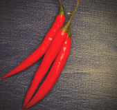 Chili pepper on jeans background — Stock Photo