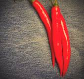 Chili pepper on jeans — Stock Photo
