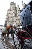 Horse-drawn carriages near the walls of St. Stephen's Cathedral, — Stock Photo
