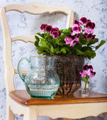 Geranium and a jug of water — Стоковое фото