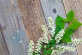 Branch of blossom bird cherry on aged boards antique table — Stock Photo