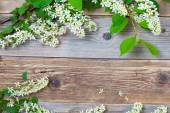 Branches of blossom bird cherry on aged boards antique table — Stock Photo