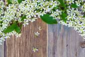 Blossom bird cherry on aged boards antique table — Stock Photo