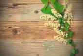 Bird cherry branch  on aged boards — Stock Photo
