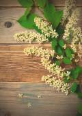 Still life with branch of blossom bird cherry — Stock Photo