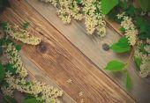 Blossom bird cherry — Stock Photo