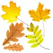 Dry fallen leaves — Stock Photo #53174713