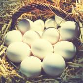 ägg — Stockfoto