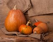 Autumn pumpkins harvest — Stock Photo