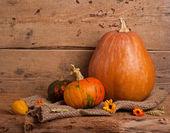 Autumn harvest — Stock Photo