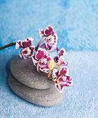 Vackra pink orchid — Stockfoto