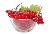 Red berries of viburnum in glass bowl — Stock Photo