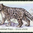 "RUSSIA - 2014: shows snow leopard, series ""The Fauna Of Russia. Wild cats"" — Stock Photo #62344771"