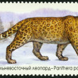 "RUSSIA - 2014: shows Amur leopard, series ""The Fauna Of Russia. Wild cats"" — Stock Photo #62344775"