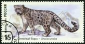 """RUSSIA - 2014: shows snow leopard, series """"The Fauna Of Russia. Wild cats"""" — Stock Photo"""