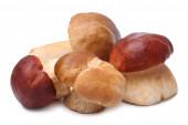 Cep mushrooms (Boletus edulis) — Stock Photo