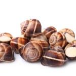 Edible snails (escargot) — Stock Photo #64733749
