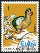 CUBA - 1974: shows Dodo, series Extinct birds — Stock Photo