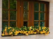 Window  with flowers in Nuremberg — Stock Photo