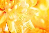 Yellow flower aster — Stock Photo