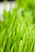 Water drops on grass — Stock Photo