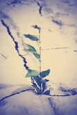 Green plant growing from cracked earth — Stock Photo
