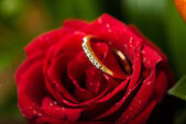 Engagement ring in rose flower — Stock Photo