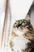 Cat looking out the window — Stock Photo