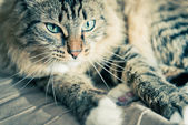 Grey cat on bed — Stock Photo