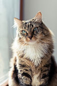 Cat with long whiskers — Stock Photo